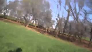 Обезумевшая корова нападает на парня с камерой