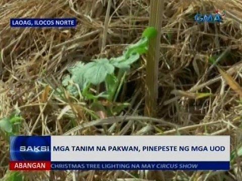 Pakwan uod - Dahil sa giardia ay maaaring pagtatae at pagduduwal