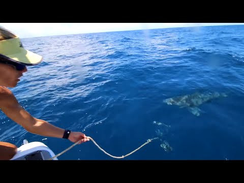 Big SHARKS RUIN fishing trip!