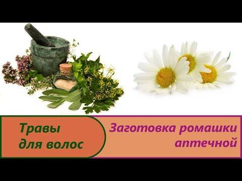 Ромашка лекарственная: свойства ромашки, применение