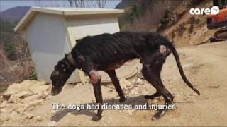 [케어TV]Hunting Dogs Starved for 10 Days with Untreated Wounds