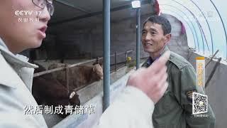 《攻坚日记》 20200123 聚力西海固|CCTV农业