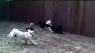 Dog Pack Socialization   Redeeming Dogs   Tod Mcvicker Flower Mound Dog Training