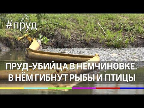 Пруд-убийца в Немчиновке. В нём гибнут рыбы и птицы