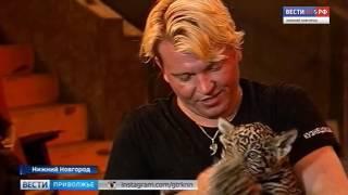 85 видов животных выступят в нижегородском в цирке