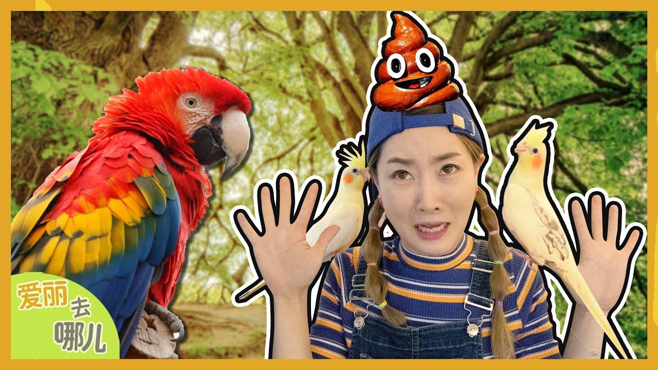 [VLOG] 會說話的鳥?去見五顏六色的鸚鵡朋友們吧!| 愛麗和故事 EllieAndStory