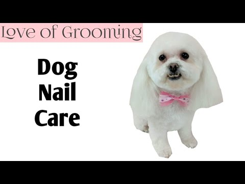 Smoothing, dremling, filing and clipping a dogs nails