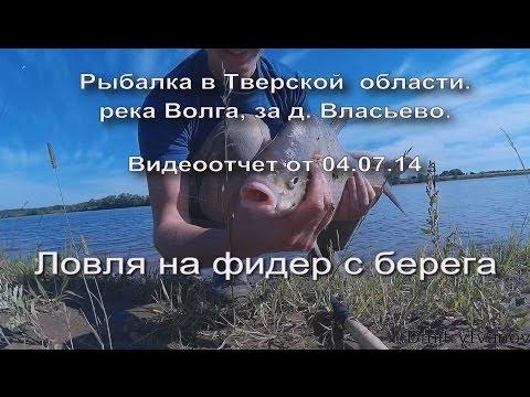 ловля сазана на волге в тверской области