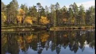 Inarisee Herbstfarben - Indian Summer - Ruska