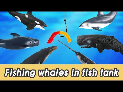 [EN] #63 Let's fish whales in my fish tank! kids education, sea animals animationㅣCoCosToy