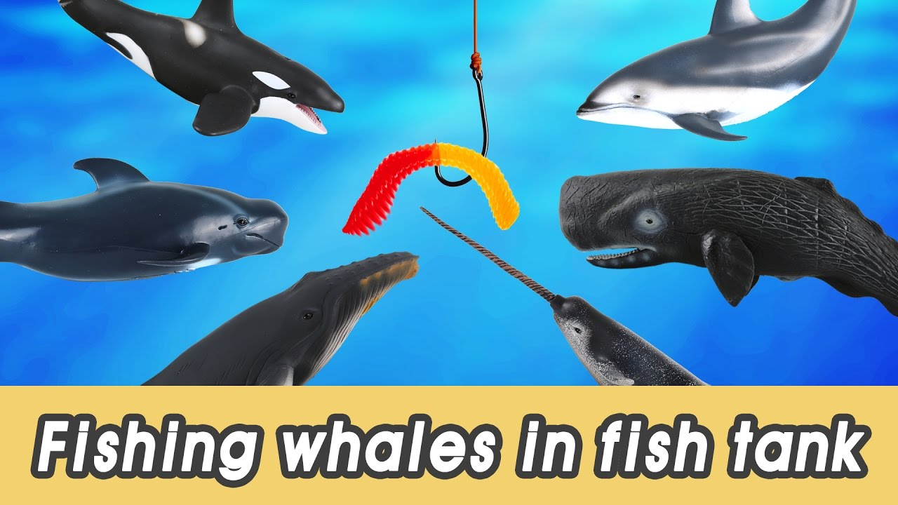 [EN] #63 Let's fish whales in my fish tank! kids education ...