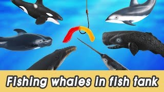 en 63 let s fish whales in my fish tank kids education sea animals animationㅣcocostoy