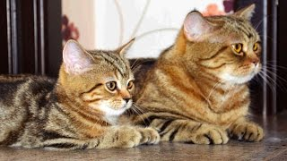 Cute Kittens and  Cats together
