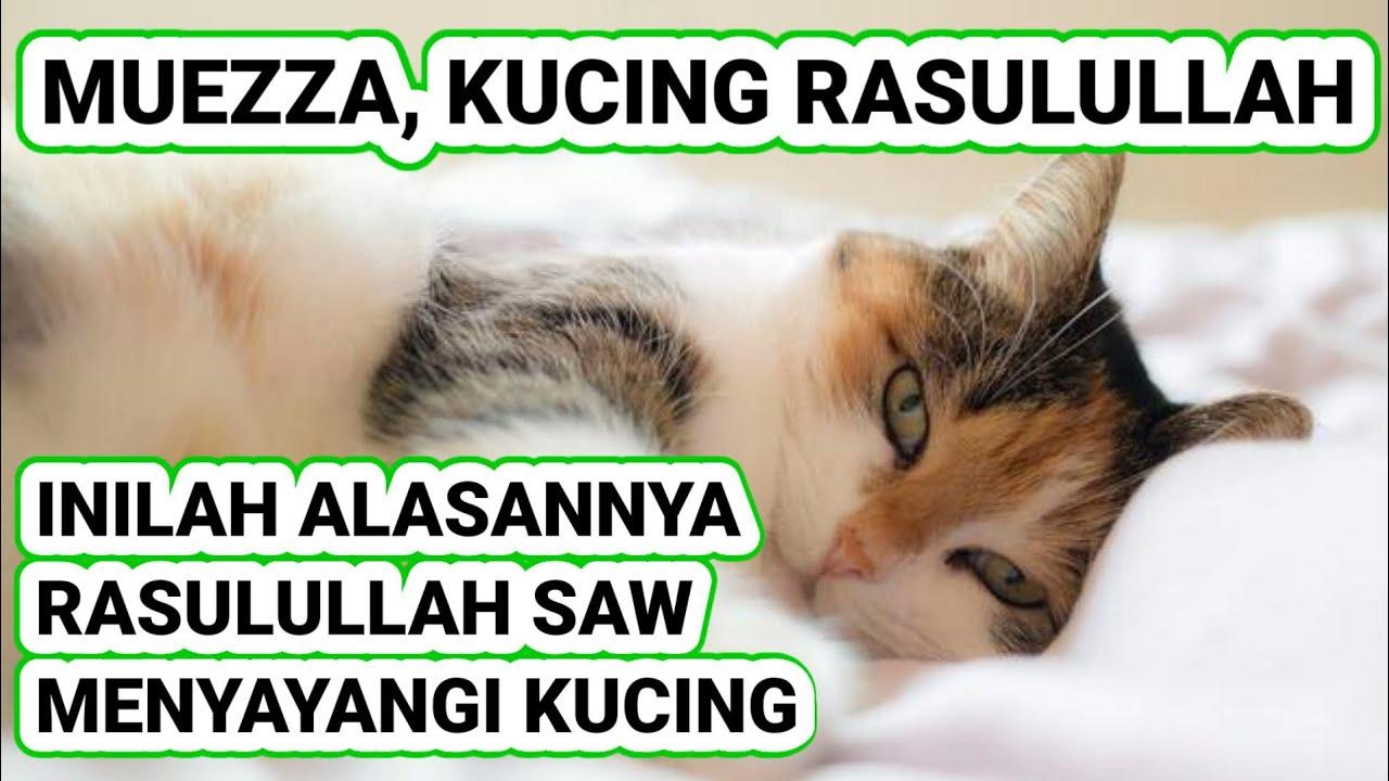 Arti Nama Kucing Nabi Muhammad 81021 Nama Untuk Kucing Comel Lucu Dan Unik