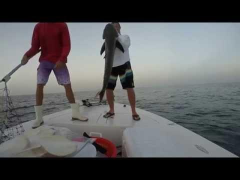 GoPro Hero 3 offshore fishing Cobia and Sailfish