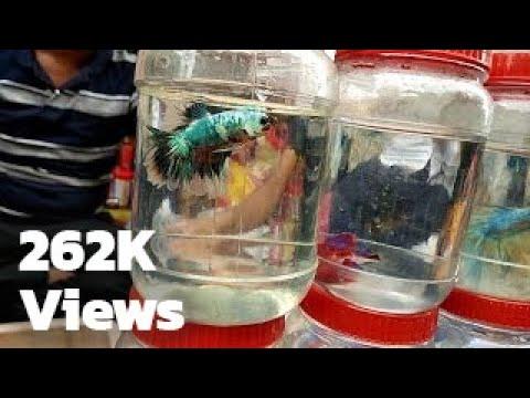 Aquarium Fish Market, Galiff Street , Kolkata, India