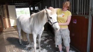 Pony scheren