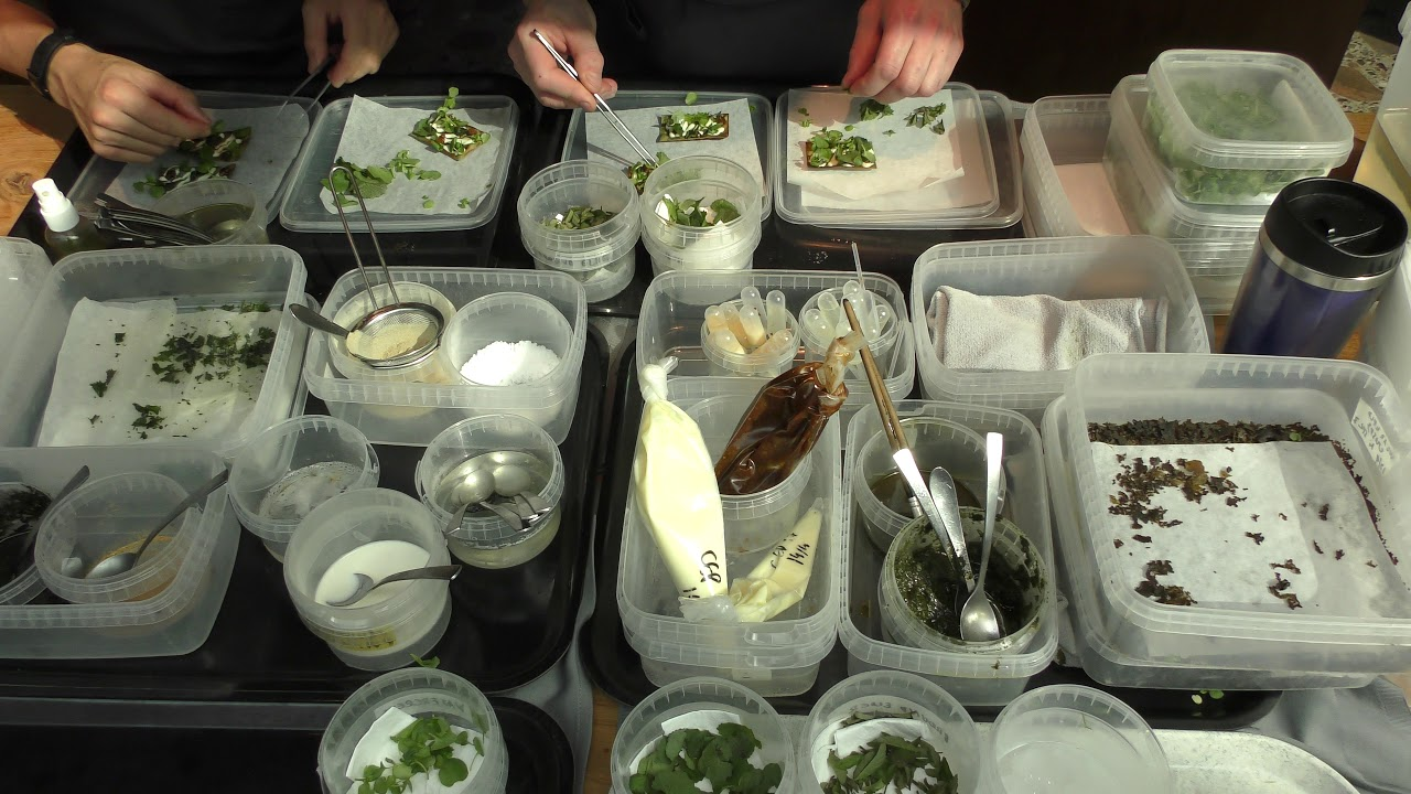 Busy Kitchen Service at restaurant Noma in Copenhagen, Denmark