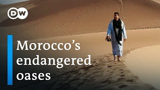 Climate change in the desert | DW Documentary