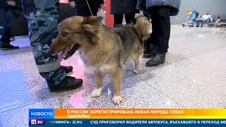 В России официально появилась новая порода собак