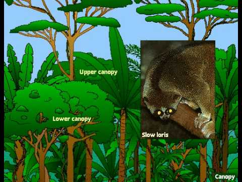 Layers of a Rainforest - YouTube