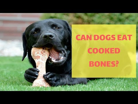 QUESTION: Can Dogs Eat Cooked Bones?