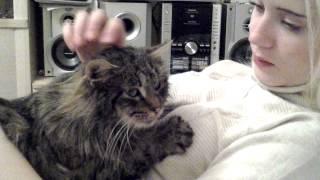 Кошка Настя -очень ласковая!