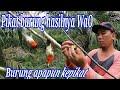 Suara Pikat Super Ampu Pikat Burung Kecil  Mp3 - Mp4 Download