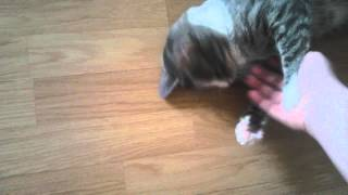 Кошка Кэт ласкается