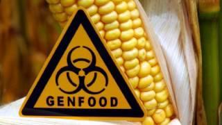 Grüne Gentechnik ist keine Hochrisikotechnologie!