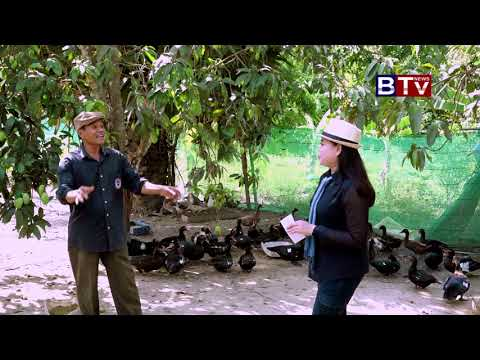 Cambodia Feed The Chicken Farm Part8