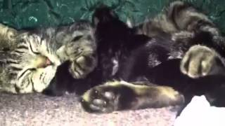 Cat birth
