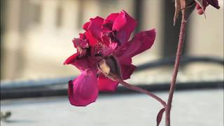 FUJIFILM Finepix HS20 EXR Manual Focus & Depth of Field in Video Test