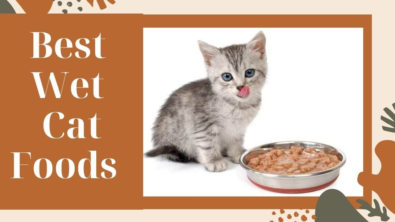 Best Canned Cat Foods 2021 (Vet Recommended Healthy Wet Cat Food)