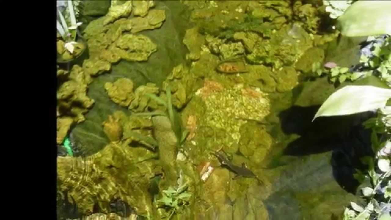 Estanques caseros de agua para peces en el jard n ii for Estanques caseros