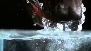 Как собака пьет воду