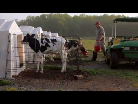 The Importance of our Dairy Industry