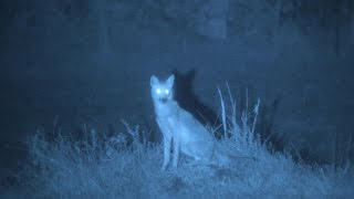 i² White Phosphor Night Vision is STILL King...