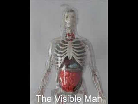 The Visible Man - YouTube