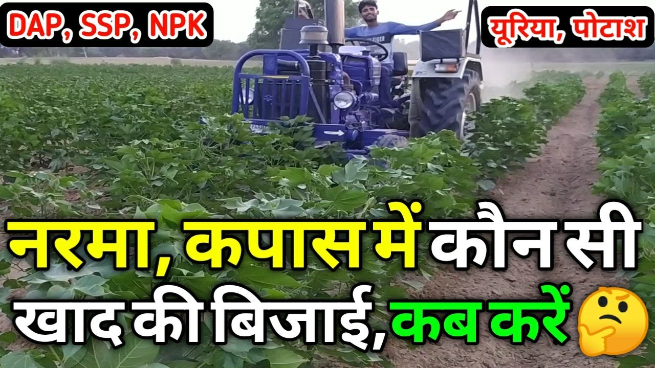 नरमा, कपास में खाद की बिजाई कब और कैसे करें Fertilizer in cotton | UREA DAP, SSP, MOP, NPK, Potash