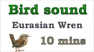 Bird sound #5 - Eurasian Wren
