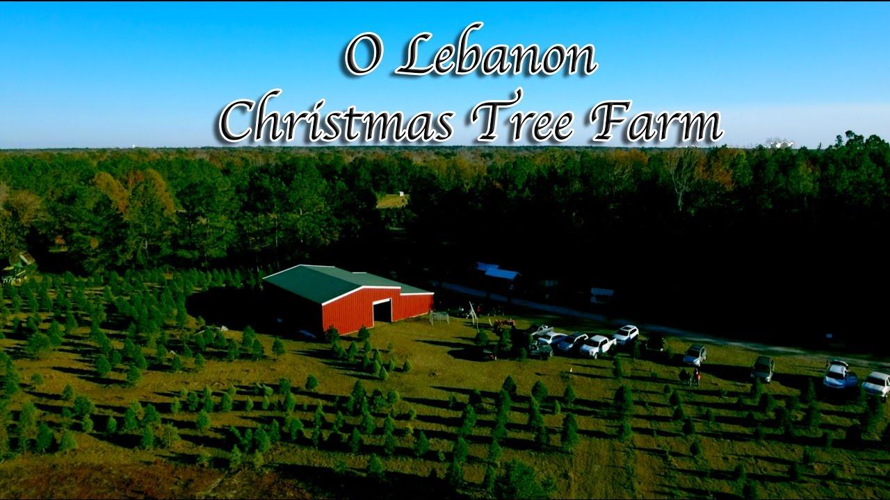 Christmas Tree Farm Lebanon Ohio Part - 24: O Lebanon Christmas Tree Farm - YouTube