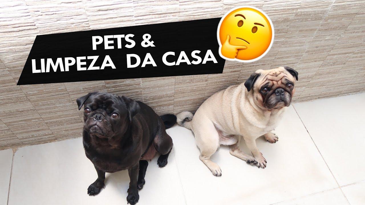 LIMPEZA DA CASA & PETS, COMO FAZER? ????