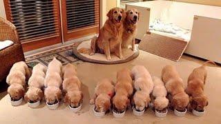 「子育て真っ最中!」 頑張るお母さん犬と、 可愛い子犬たちに癒される...