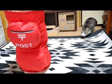 寸前で止める猫アタック