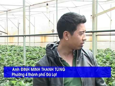 Vườn dâu tây sạch tại Đà Lạt