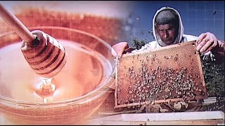 Kiváló minőségű a tavaly előállított hazai méz