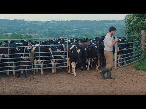 On the farm - a day in the life of an Arla dairy farmer