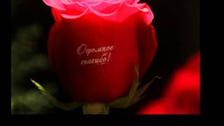 говорящие цветы(Наклейки на цветы. По любому поводу., 2012-01-21T19:53:38.000Z)