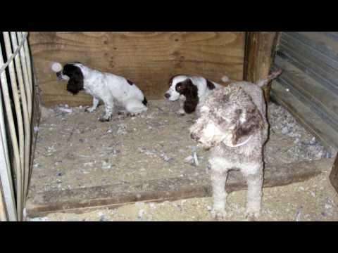 Gang behind horrifying puppy farm get suspended sentences